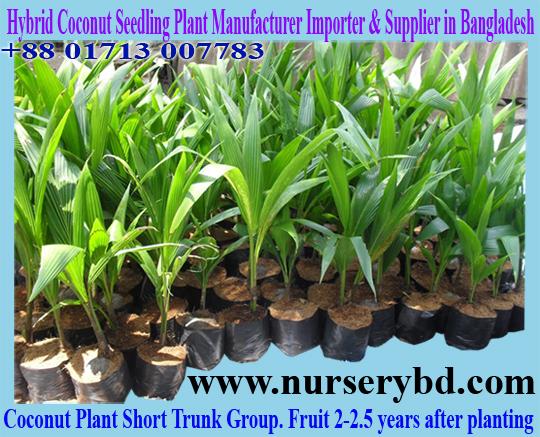 Hybrid Coconut Seedling Plant Manufacturer Importer Desh