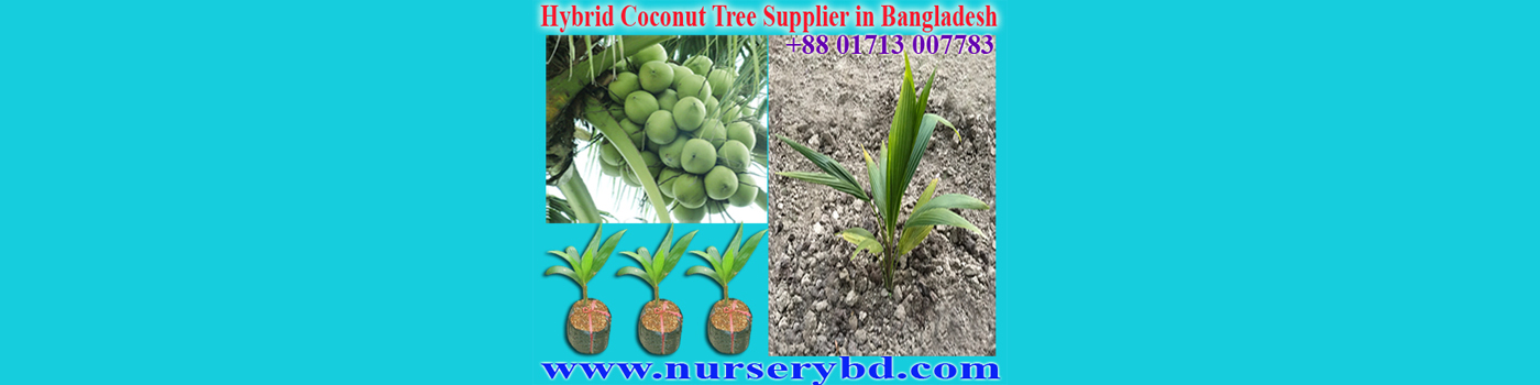 Red Hybrid Coconut Seedling Plant Supplier Company in Bangladesh, Green Xiem Coconut Seedling Plant Supplier Company in Vietnam, Green Xiem Coconut Seedling Plant Supplier Company in Bangladesh, Green Hybrid Coconut Seedling Plant Supplier Company in Bangladesh, Xiem Coconut Seedling Plant Supplier Company in Bangladesh
