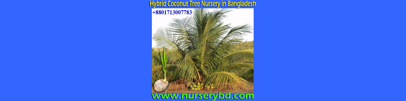 Red Xiem Coconut Seedling Plant Supplier Company in Bangladesh, Green Xiem Coconut Seedling Plant Supplier Company in Bangladesh, Aromatic Coconut Seedling Plant Supplier Company in Vietnam, Red Aromatic Coconut Seedling Plant Supplier Company in Vietnam, Green Aromatic Coconut Seedling Plant Supplier Company in Vietnam, Aromatic Coconut Seedling Plant Supplier Company in Thailand