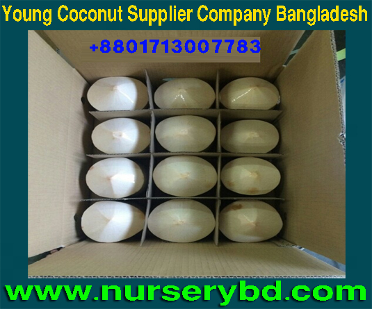Aromatic Green Young Coconut & Coconut Seedling Tree Supplier Company in Bangladesh, Bangladesh Xiem Short Coconut Seedling Tree Supplier Company ,Early Yield Coconut Seedling Tree Supplier in Bangladesh, Green Young Coconut and Coconut Seedling Tree Supplier in Bangladesh