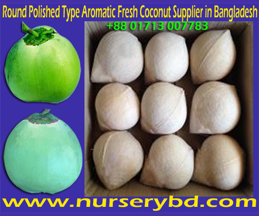 Thai Coconut Tree for Sale, Thai Aromatic Coconut Tree for Sale, Sweet And Aromatic Dwarf Coconut Tree Nursery in Thailand, Sweet And Aromatic Dwarf Coconut Tree Nursery in Bangladesh, Online Coconut Tree Nursery in Bangladesh, Sweet And Aromatic Dwarf Coconut Tree Nursery in Vietnam