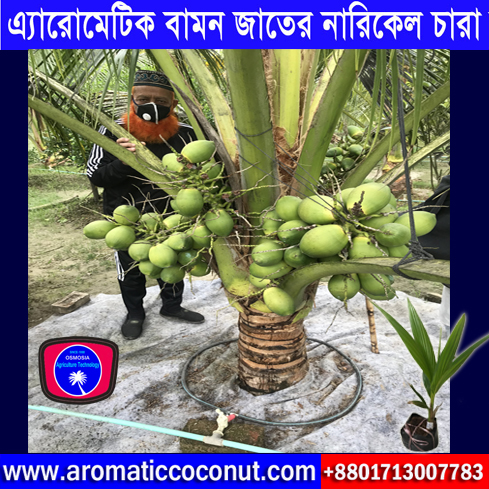 Hybrid Flower Seeds Supplier Company in Bangladesh, Bangladeshi Hybrid Seeds Supplier Company, Early Production Coconut Tree Manufacturer Exporter and Supplier Company in India, Hybrid Early Production Coconut Tree Manufacturer Exporter and Supplier Company in India