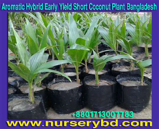 Hybrid Seedling Farming Tree Supplier Company in Bangladesh, Hybrid Seedling Supplier Company in Bangladesh, Hybrid Seedling Suppliers Company in Bangladesh, Hybrid Seed Supplier Company in Bangladesh, Bangladesh Hybrid Seed Supplier Company, Hybrid Seeds Supplier Company in Bangladesh