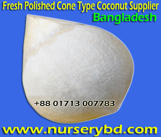 Hi Quality Vietnamese Hybrid Dwarf Coconut Plant Supplier in Bangladesh, Vietnamese Hybrid Dwarf Coconut Seedling Sale nursery Price in Bangladesh, Vietnamese Hybrid Dwarf Coconut Plant Supplier Company in Bangladesh, Philippines Hybrid Dwarf Coconut Tree Supplier in Bangladesh