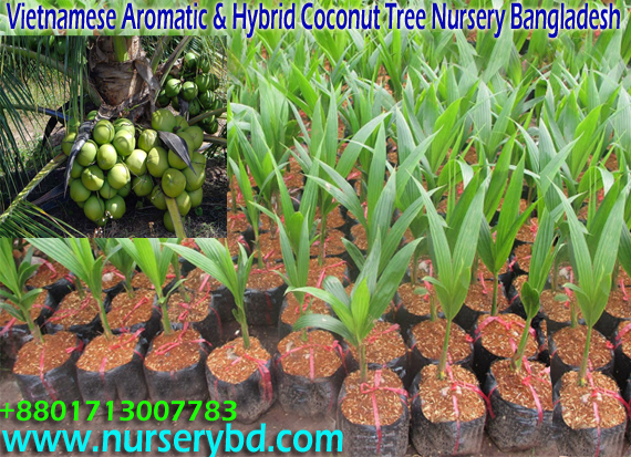 Seed Nursery Companies Thenurseries