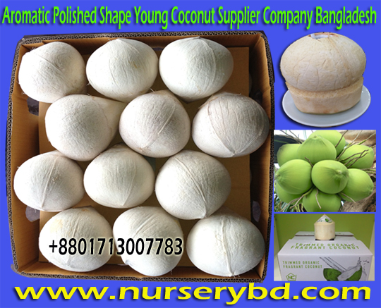 Young Coconut & Coconut Seeds Plants Suppliers in Vietnam, Xiem Short Green Coconut Seedling Plant Supplier Company in Bangladesh, Aromatic Short Green Coconut Seedling Plant Supplier Company in Bangladesh, Bangladesh Aromatic Short Green Coconut Seedling Plant Supplier Company